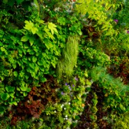 Jardim Vertical: A Gestão Inteligente dos Espaços Verdes